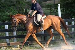 Allegiant in training Bits & Bytes Farm