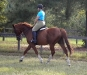 Admiration - Thoroughbred horse for sale