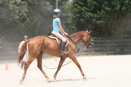 Allegiant on the lunge line with Amanda