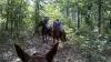 Bounced Trail Ride 20100925