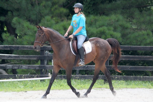 Brat Maverick is a Thoroughbred horse for sale at Bits & Bytes Farm.