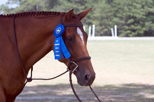 Former Bits & Bytes Farm horse, Brett, wins the blue at his first A show!