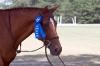 Former Bits & Bytes Farm horse, Brett, wins the blue at his first A show!