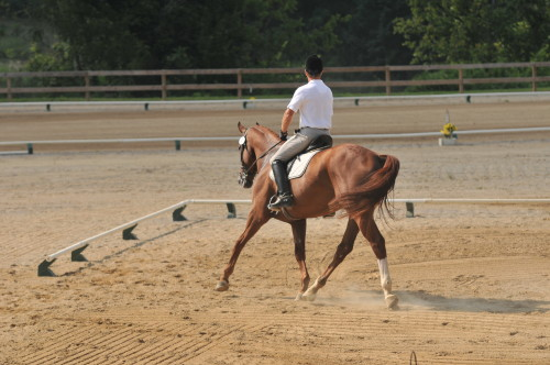 OTTB Carmac Has a Successful New Career in Eventing
