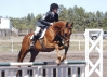 OTTB Golds Anatomy's First Recognized Horse Trail June 2010