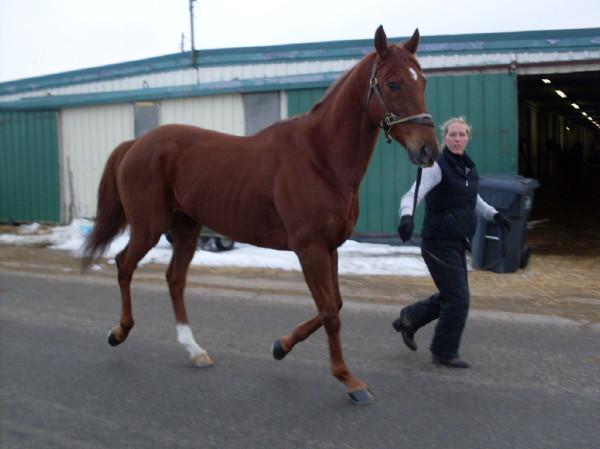 Golds Anatomy - February  2009