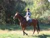 Horses-001