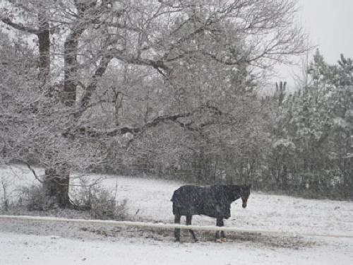 Joe Bear in the snow2010
