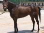 K O River Crossing - 2007 Prospect Horse Photos