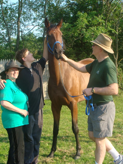 Muchu - a former race horse now in dressage training