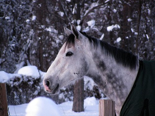 Ex-race horse enjoys the Maryland snow storm
