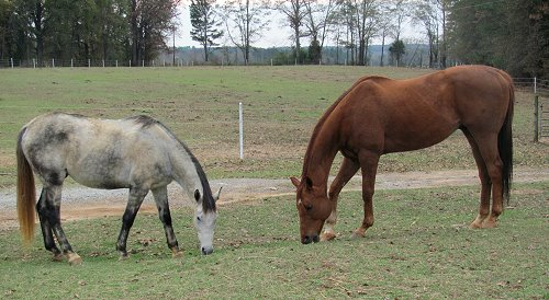 Cortableau and TK\'s Turn hang out together in the pasture