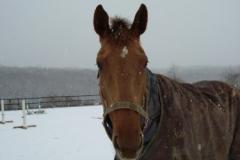 Who's Cindy Sue - December 2009