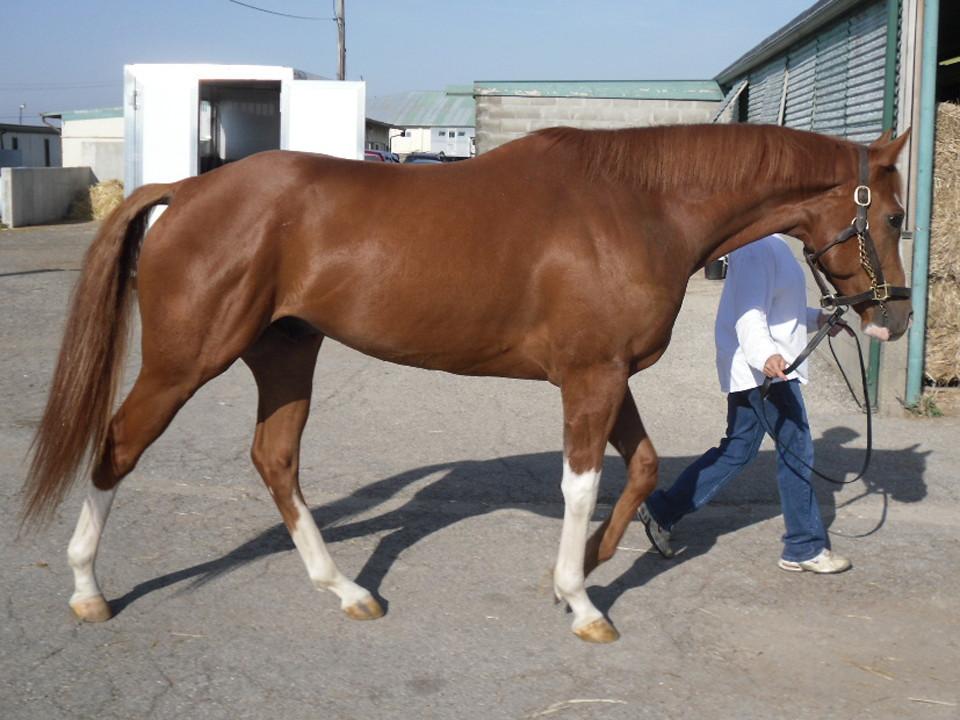 http://www.bitsandbytesfarm.com/newz/thoroughbred-horses-for-sale/prospect-horses