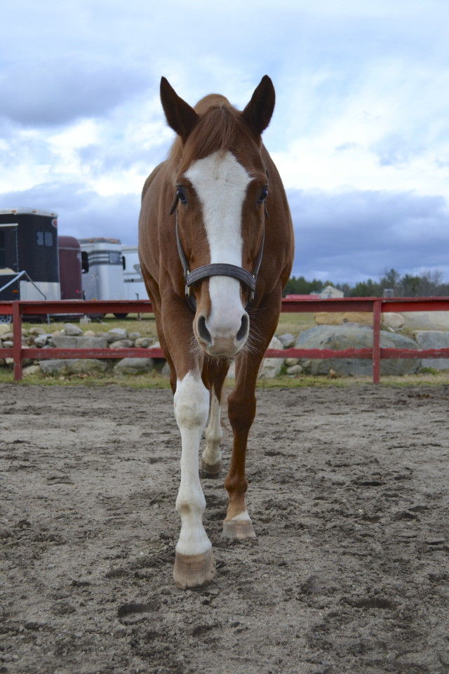 Win For Morgan was a Thoroughbred Horse for sale on the Bits & Bytes Farm Web site.