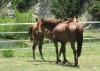 wise-young-sage-20090616_2