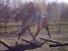yada-poles20120506-04