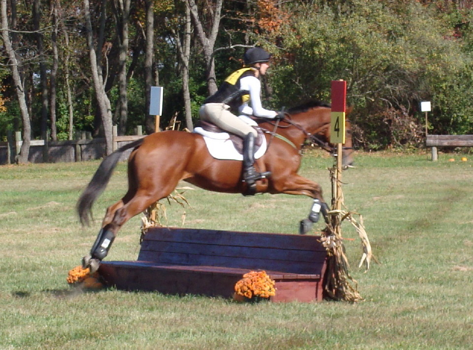 Heather's Best at the NJ Horse park fall horse trials 003t