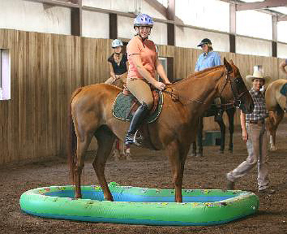 Title Search - Thoroughbred horse sold by Bits & Bytes Farm
