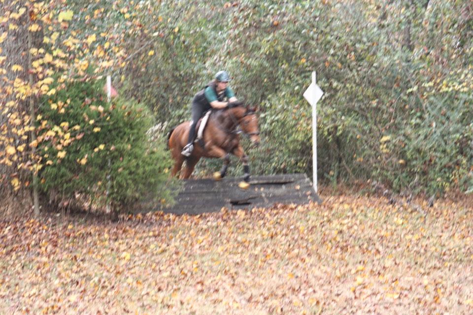 Heather's Best was a steeplechaser