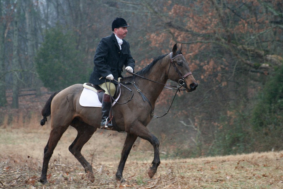 Rap It Up fox hunting just four months off-the-track