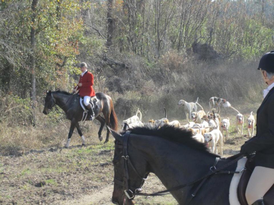 Imatexan fox hunting in Georgia