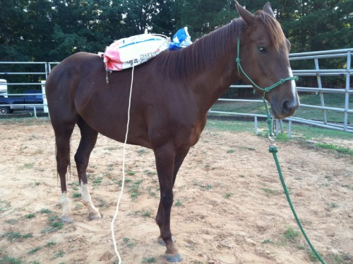 Ain't  Misbehavin - - Despooking ex-race horse  Mary Misbehavin