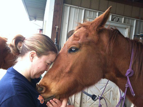 Mary Misbehavin former race horse turned special sport horse