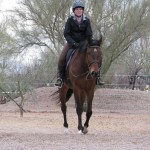 Tax Hike - Thoroughbred sold by Bits & Bytes Farm