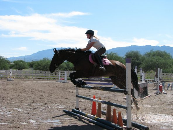 Tax Hike - OTTB Learning to jump