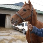 Cab at the racetrack January 2012