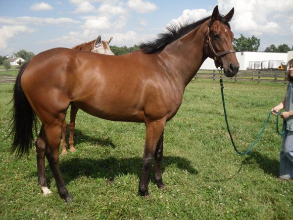 Muchu's Prospect Horse photo