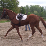 Breaking Free - Former Race Horse To Sport Horse