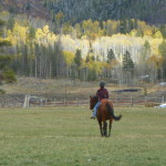 Tillo - OTTB living in Colorado